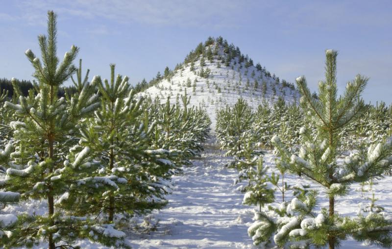 Resultado de imagen de agnes denes tree mountain